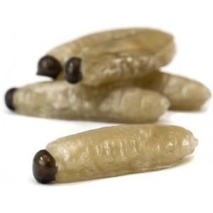 Osia larva Tandem Baits WINNER Grub